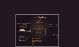 zoo Captivity