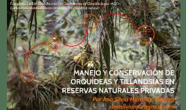manejo y conservacion de orquideas y tillandsias
