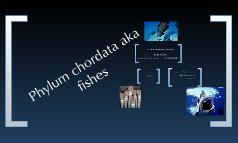 Fish Presentation