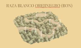 RAZA BLANCO OREJINEGRA