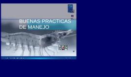 BUENAS PRÁCTICAS DE MANEJO EN CAMARONERAS