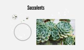 Copy of Succulents