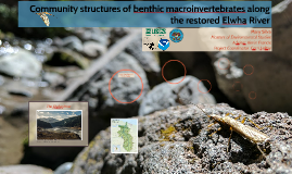 Community Structures of Benthic Macroinvertebrates along the