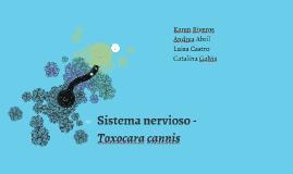 Sistema nervioso - Toxocara cannis