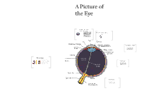 Copy of The Eye