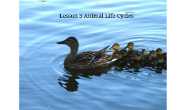 Lesson 3 Animal