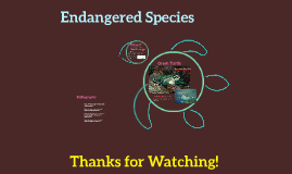 Endangered: Green Turtle