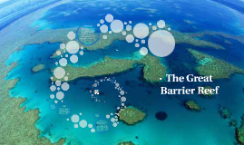 Copy of The Great Barrier Reef