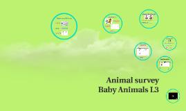 T11,L3 gr3/4 Animal survey