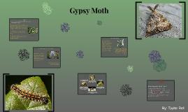 The Gypsy Moth