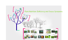 Copy of Plant Nutrition: Deficiency and Excess Symptom