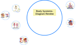 Body Systems- Diagram Review