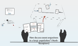 Lesson 1.2.2, Part 2: How do we count organisms in large populations?