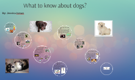 What to know about dogs?