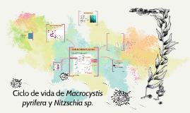 Ciclo de vida de Macrocystis pyrifera y Nitzschia sp.