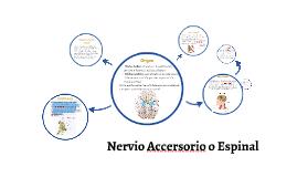 Nervio Accersorio o Espinal