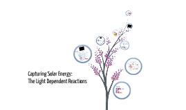 4.1: Capturing Solar Energy: The Light-Dependant Reactions