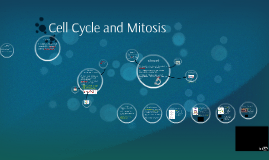 Cell Cycle, Mitosis, Asexual Reproduction