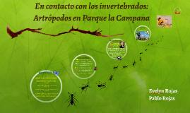 Observación y clasificación de invertebrados: Parque la Camp