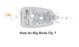 How do big birds fly ?