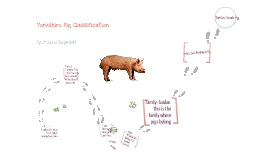 Copy of Yorkshire Pig Classification