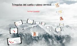 Copy of Triangulos del cuello-plexo cervical