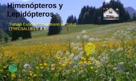 Himenopteros y Lepidopteros