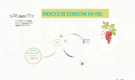 Copy of ÍNDICES DE COSECHA EN VID.
