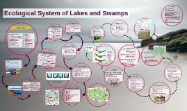 Ecological System of Lakes and Swamps