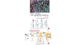 101-GCB Les systèmes nerveux