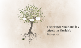 The Brown Anole and it's effects on Florida's Ecosystem