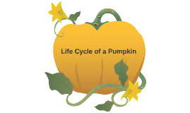 Copy of Life Cycle of a Pumpkin