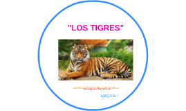"""""""LOS TIGRES"""""""