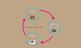 The life cycles of komodo dragon by Caitlin Doonan on Prezi