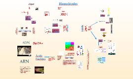 Biomolècules 1r batxillerat