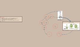 Copy of Levenscyclus Zaadplanten