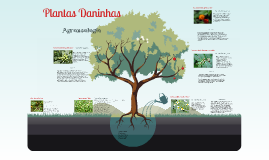Travalho Agroecologia