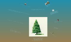Coniferous Trees