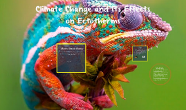 The Effects Climate Change Has On Ectotherms