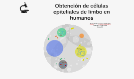 Obtención de células epiteliales de limbo en humanos