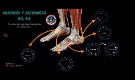 Copia de Copy of Anatomía y patologías del pie