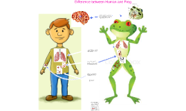 Copy of Difference between Human and Frog