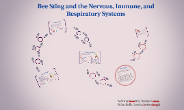 Copy of Bee Sting and the Nervous, Immune, and Respiratory Systems