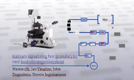 Kalcium-signalering hos granulocyter med kvotbildningsmikroskopi