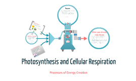 Photosynthesis and cellular respiration by teika clavell on prezi ccuart Gallery
