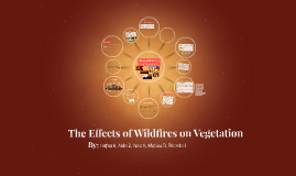 The Effects of Wildfires on Vegetation