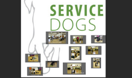 Texas Service Dogs