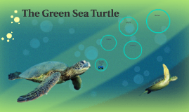 Copy of The Green Sea Turtle