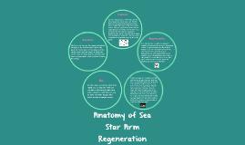 Anatomy of Sea Star Arm Regenation