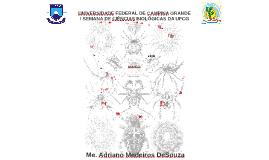 Minicurso_Cajazeiras_Araneae